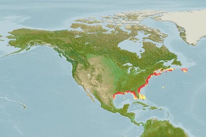 Black Sea Bass Range jpg