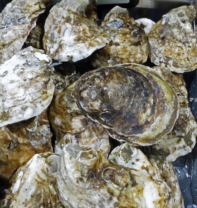 Blue point Oysters jpg