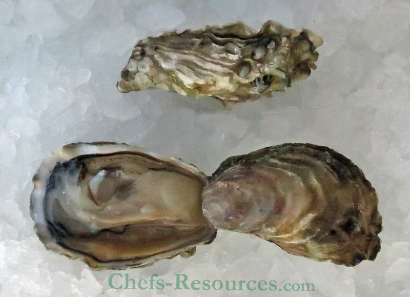 Brooklyn Creek Oyster