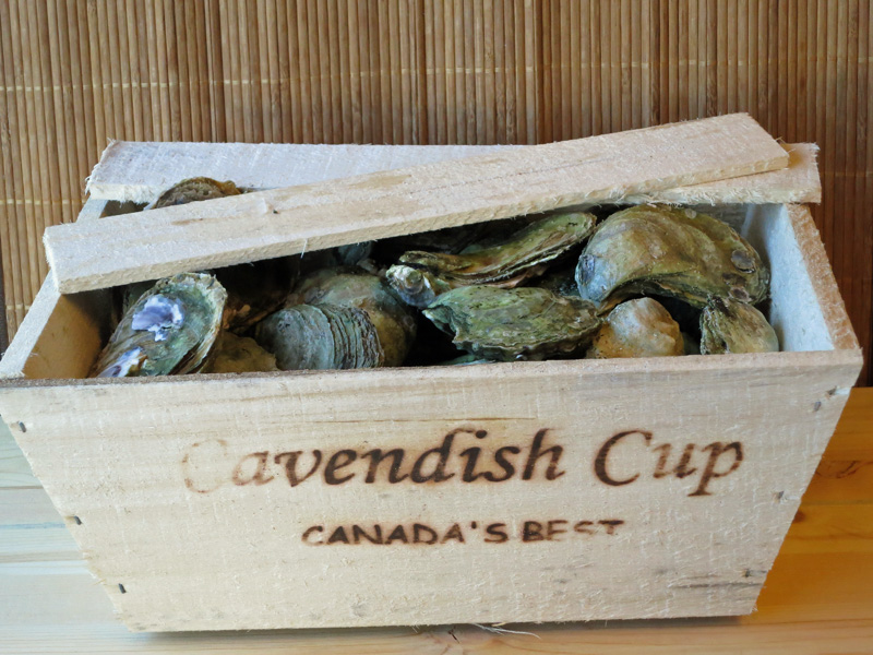 Cavendish Cup Oyster Box jpg