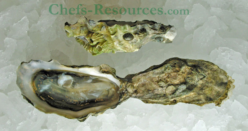 Cortes Island Oysters