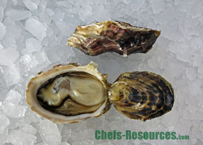 Cougar Creek Oysters