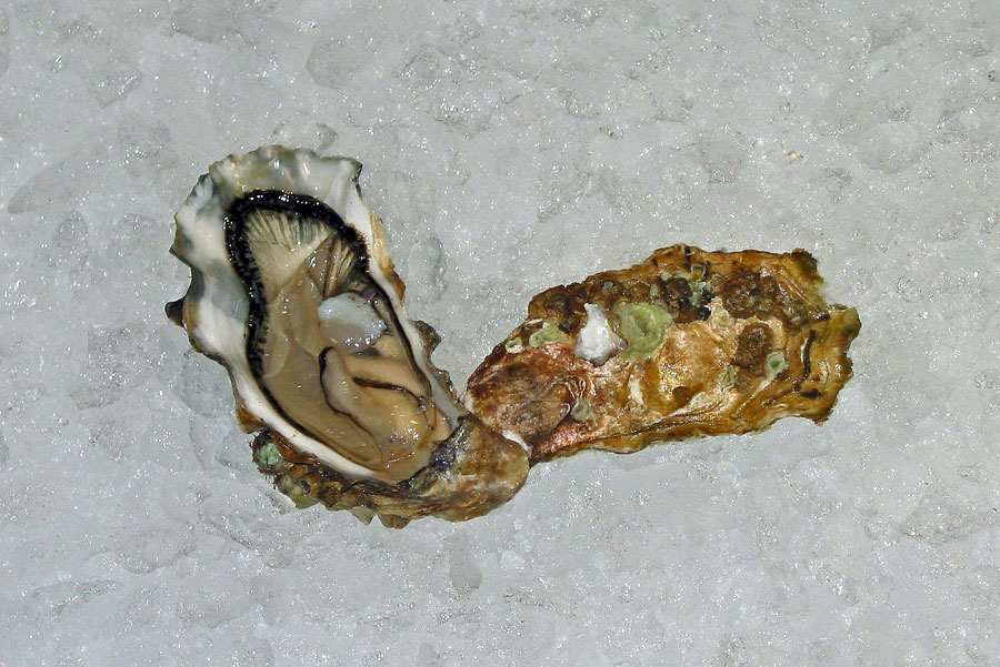Eagle Creek Oysters