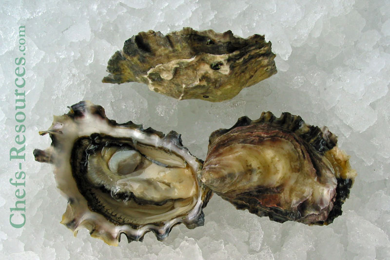 Emerald Cove Oyster
