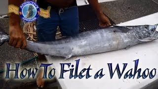 Fillet Ono also called Wahoo