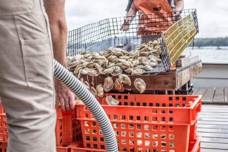 Glidden Point oysterfarm