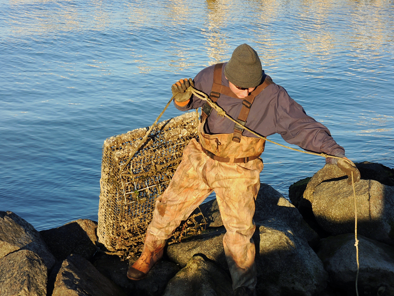 Harvesting Forbidden Oysters in the rack