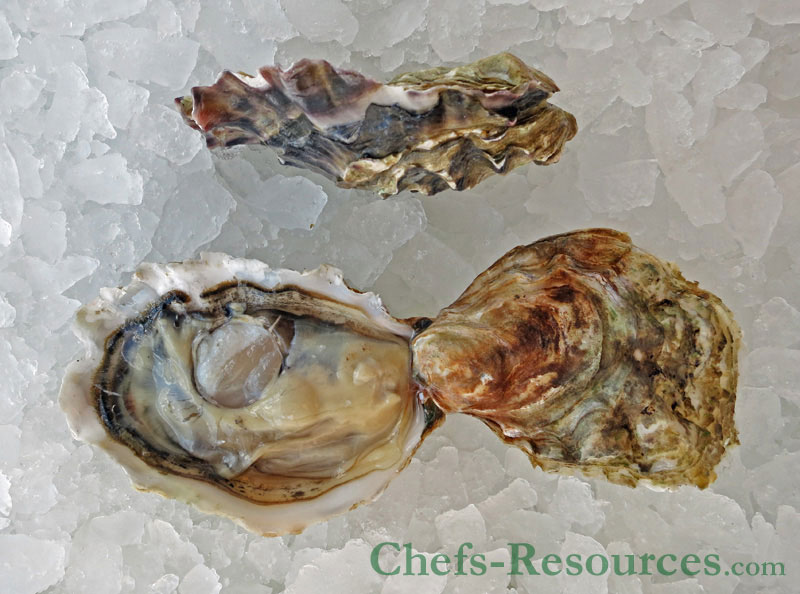 Hunters Point Oysters
