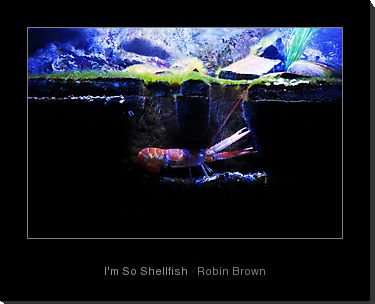 I'm so Shellfish by Robin Brown