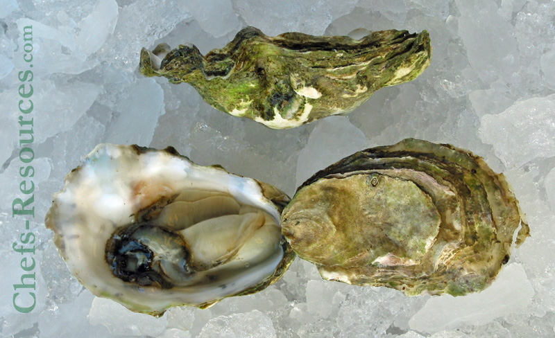 Imperial Eagle Oysters
