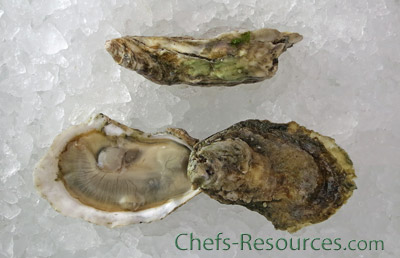 Misty Point Oysters