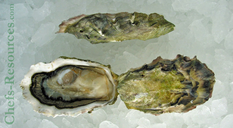 Okeover Organic Oyster