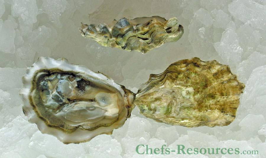 Otter Cove Oysters