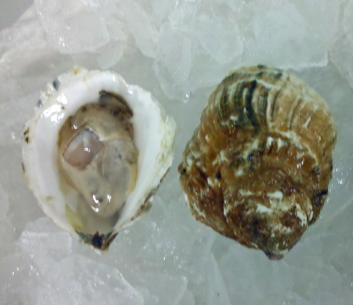 shucked Quonset Point Oyster