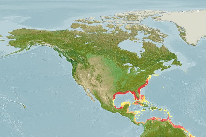 Red Drum native Range and Location