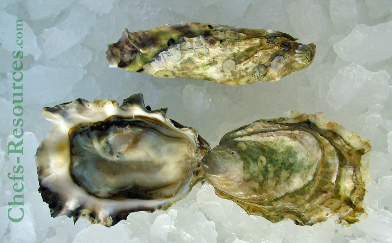 Ships Point Oysters