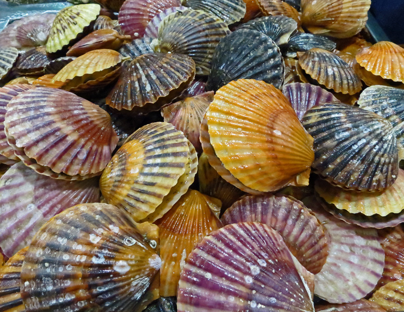 Singing Pink Scallops - Chefs Resources