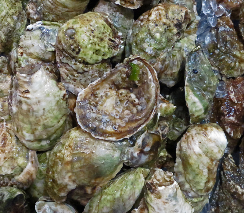 Stingray Virginia Oysters