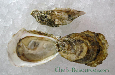 Watch House Point Oysters