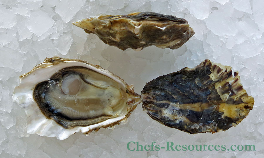 Wildcat Cove Oysters