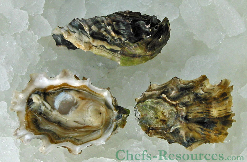 Windy Point Oysters